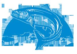 Vindelälvsfiske